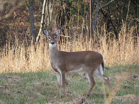 Alert Little Doe by Kathy Long