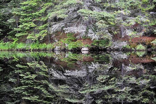 Algonquin Mirror by Claudio Bacinello