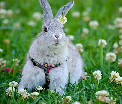 Alice the Bunny by Tina Shamay