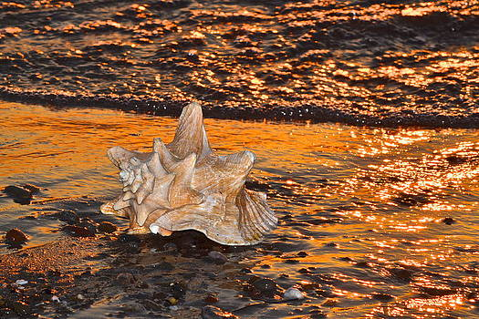 Frozen in Time Fine Art Photography - Alight and Aglow