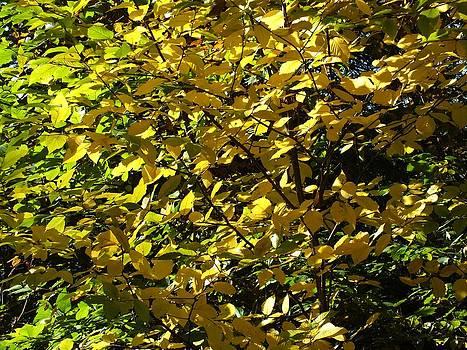 All Leaves by Gene Cyr