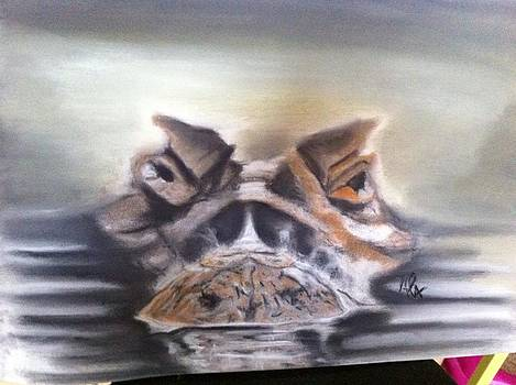 Alligator by Alessandro Cedroni