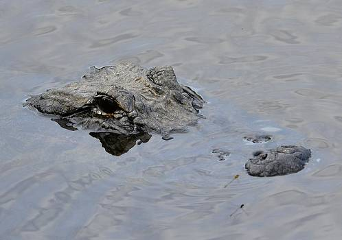 Alligator by Lorelei Galardi