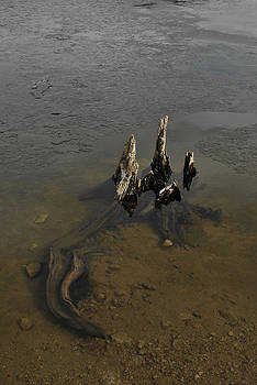 Randal Bruck - Alligator Stump