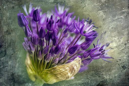 Ludmila Nayvelt - Allium Blossoms
