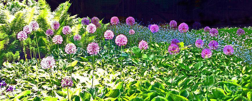 Ausra Huntington nee Paulauskaite - Allium garden In Bloom