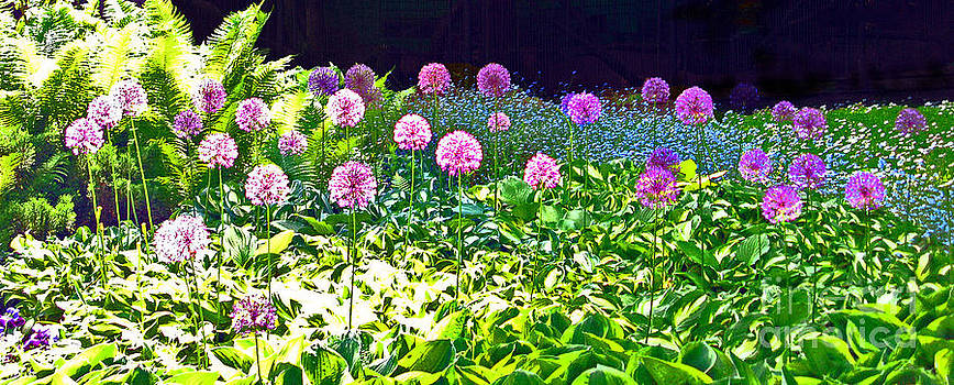 Allium garden In Bloom by Ausra Huntington nee Paulauskaite