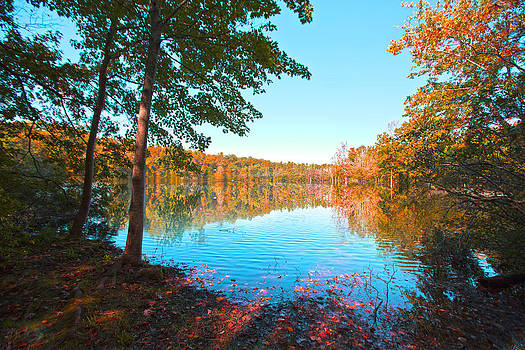 Regina  Williams  - Almost Fall 2