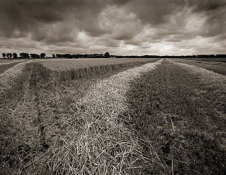 Almost harvested by Paul Indigo