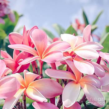 Aloha by Sharon Mau
