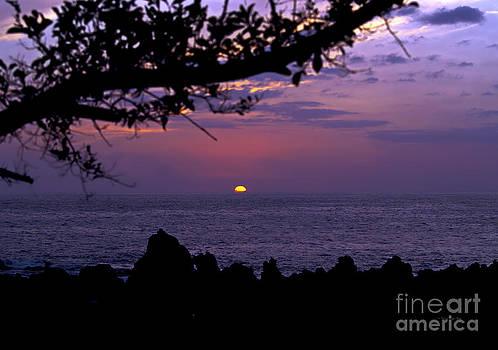 Aloha V by Patricia Griffin Brett