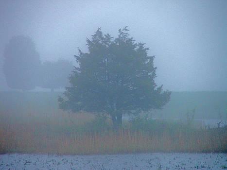 Alone in the fog by Nancy Landry
