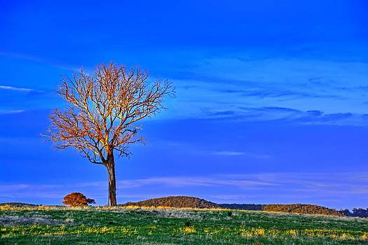 Alone On The Hill by Terry Everson