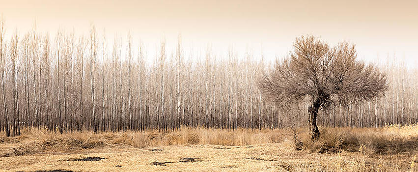 Alone by Stephanus Le Roux