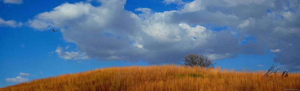 Along Big Bluestem Ridge by Bruce Morrison