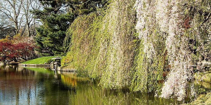 David Hahn - Along the Pond