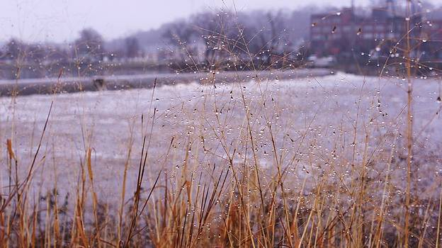 Rosemarie E Seppala - Along The Shores Of Grand Rapids  In Winter