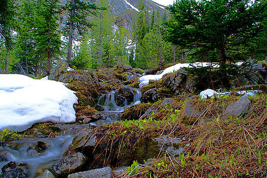 Alpine Spring  by Kevin Bone