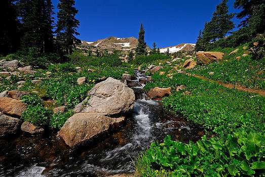 Alpine Stream by Stefan Carpenter