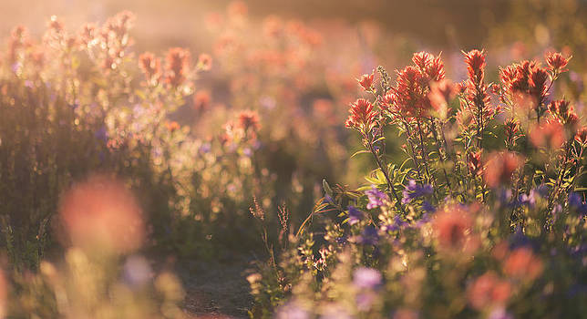 Alpine Wildflowers at Mt. St. Helens by Ryan Manuel