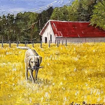Always time for fetch by Lisa Browning