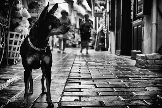 Always vigilant by Spyros Papaspyropoulos
