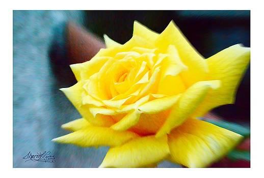 Amarillo Rose by Sharon  Lavoie