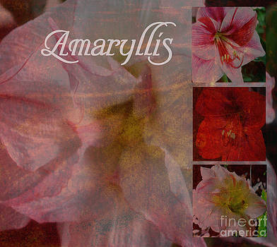 Amaryllis Collage by Eva Thomas