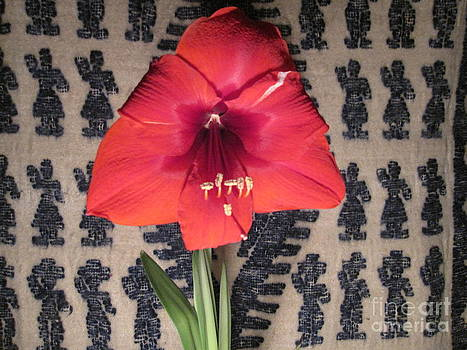Amaryllis Flower with Guatemalan Mountain Blanket by Elizabeth Stedman