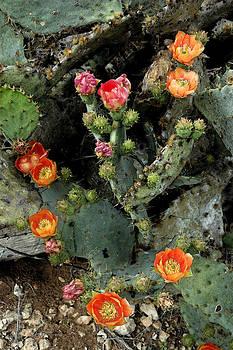 Robert Anschutz - Amazing Blooms