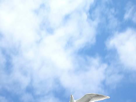 Marcello Cicchini - Amazing cloud
