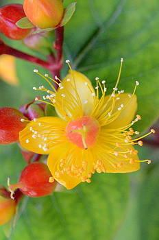 Amazing Flower by Riad Belhimer