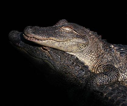 Erin Tucker - American Alligator