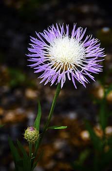 American Basket - Flower by Greg Reed