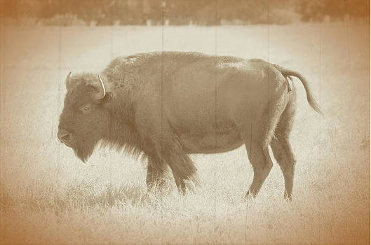 Ronald T Williams - American Bison Vintage
