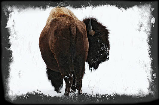 American Bull by Patrick Derickson