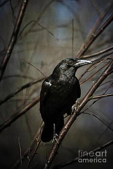 Lois Bryan - American Crow