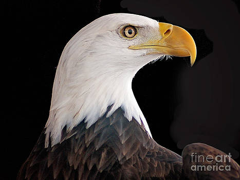 American Eagle by Shannon Beck-Coatney