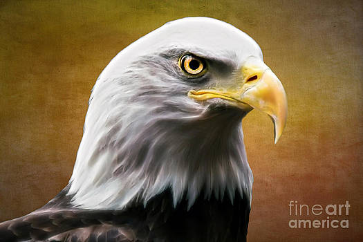 American Eagle by Shannon Rogers