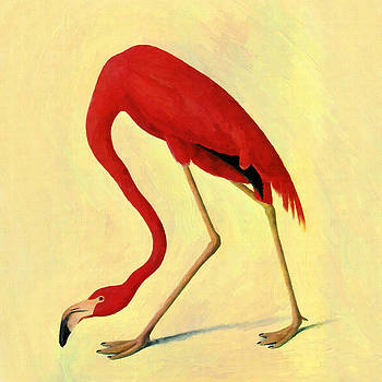 American Flamingo by Audubon