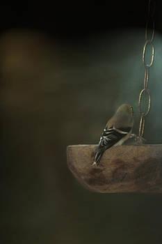American Goldfinch by Dottie Dees