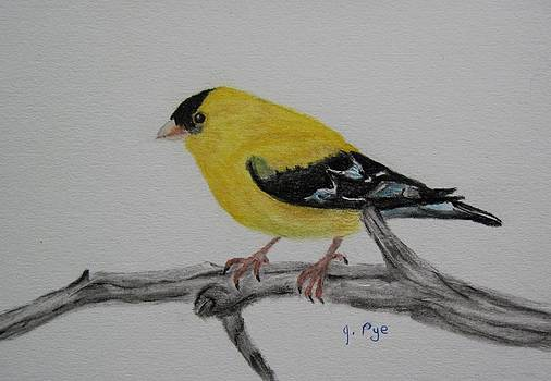 American Goldfinch by Joan Pye