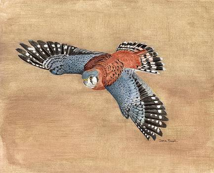 American Kestral by Dana Spring Parish