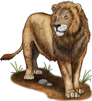 American Lion Extinct, Illustration by Roger Hall
