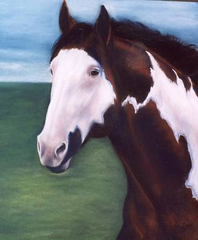 American Paint Horse by Jane Friday