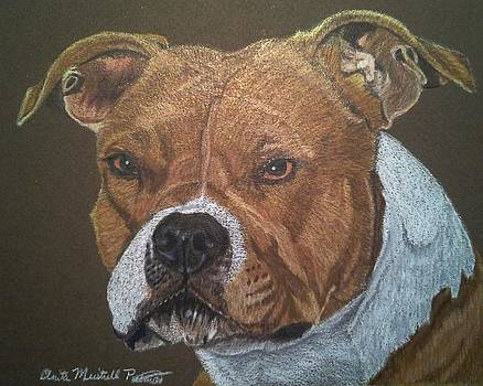 American Pit Bull Terrier by Anita Putman
