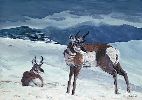 American Pronghorn by Tom Blodgett Jr