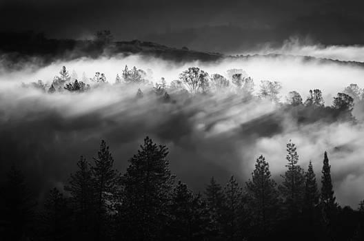 American River Canyon by Sherri Meyer