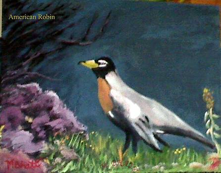 American Robin by M Bhatt