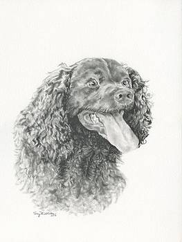 American Water Spaniel by Terry Middleton